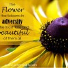 adversity, holistic health